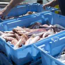 Peix Fresc Barceloneta